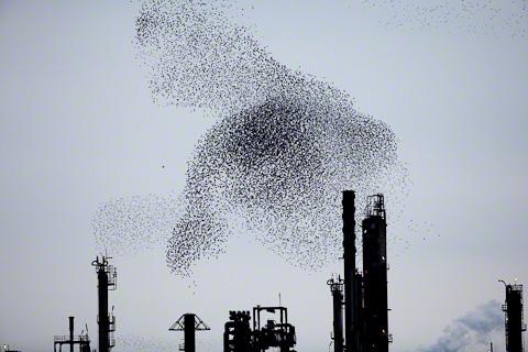 Refinery-Flocks-Blue-07