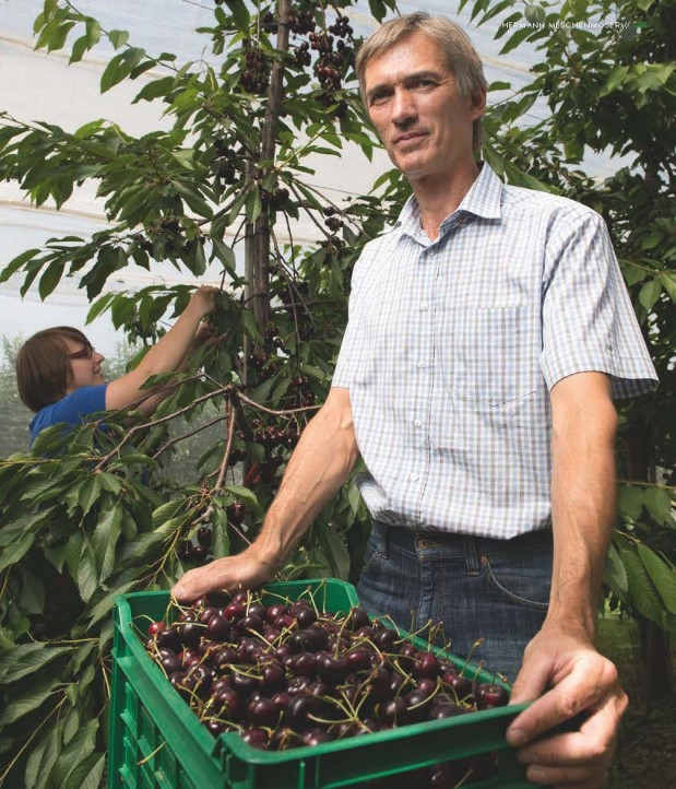 """Der Herr vom Augustenberg. """"Bei Hermann Meschenmoser gedeihen allerlei süße Früchte. Darunter auch Neuseeländer"""", schreibt Klaus Müller."""